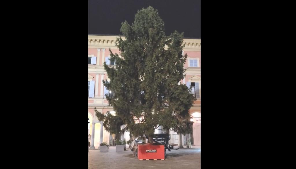Albero di Natale in piazzetta Mercanti